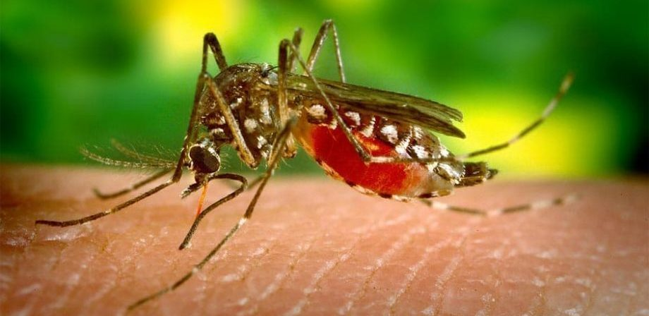 mejor repelente mosquitos