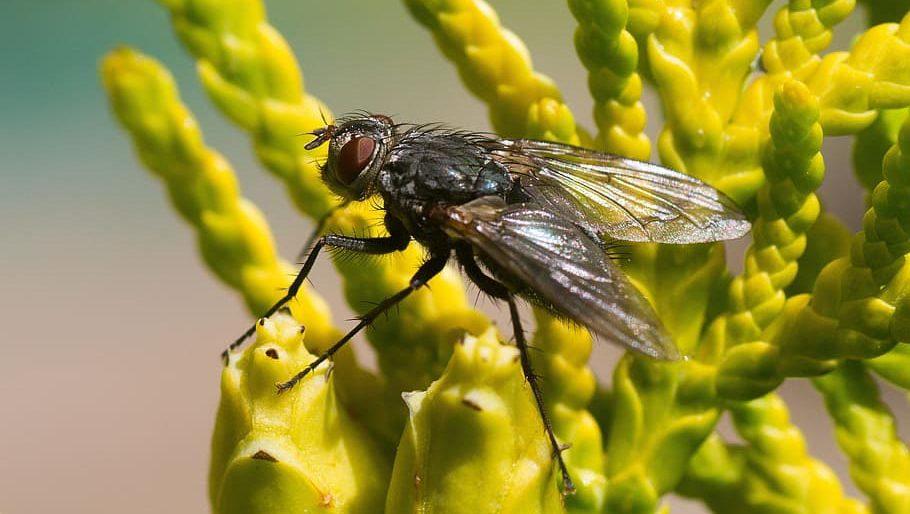 repelente moscas natural